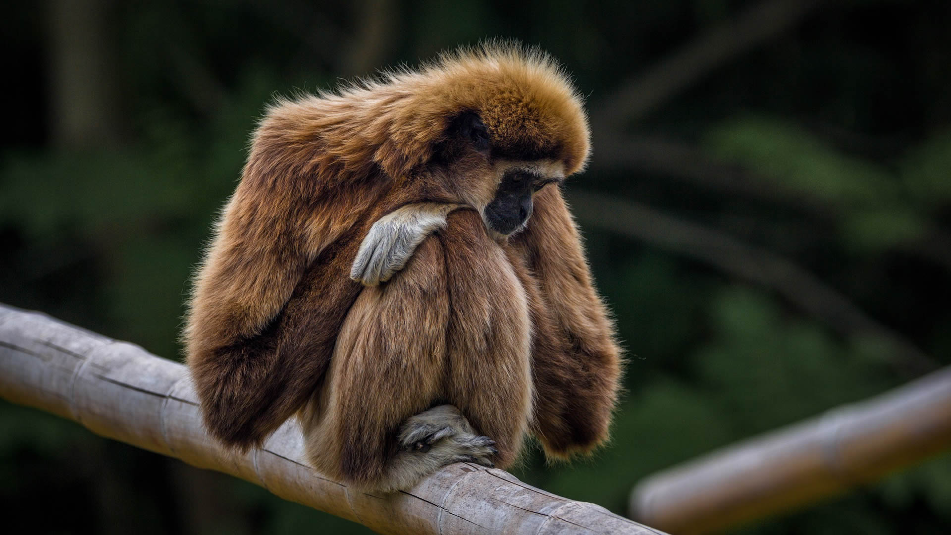 Al menos 550 especies de mamíferos podrían extinguirse y los humanos somos responsables, indica investigación