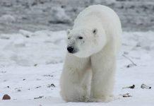 El Ártico está pasando a un nuevo estado climático debido al calentamiento global
