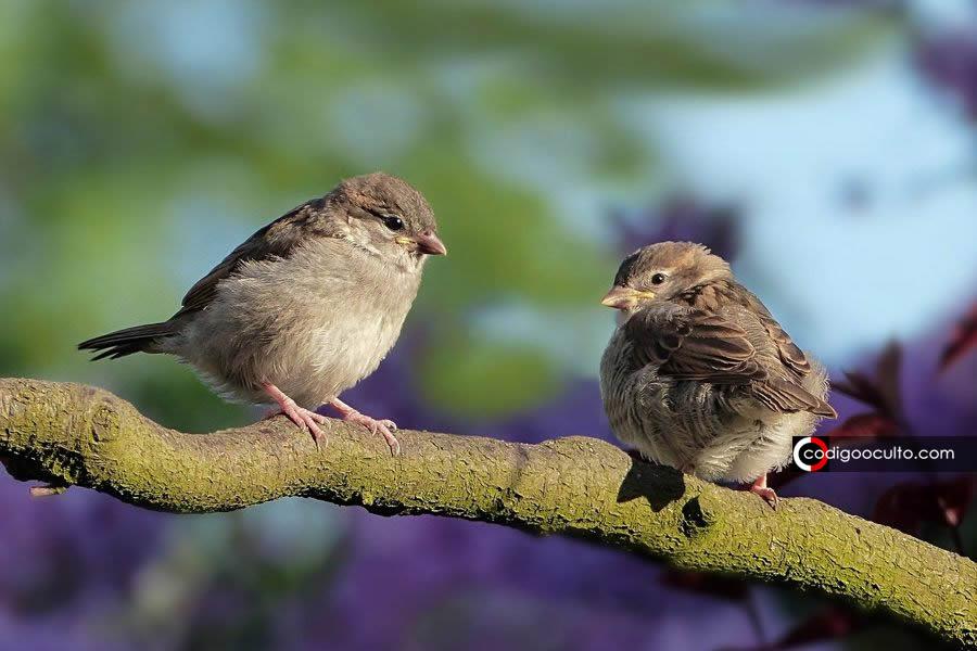 Aves están cayendo muertas en Nuevo México, potencialmente en cientos de miles