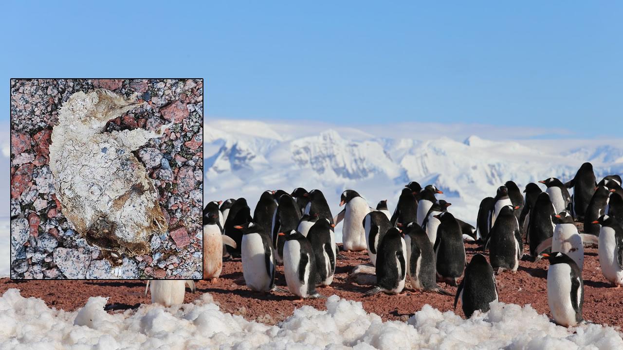 Derretimiento de la Antártida revela colonia de pingüinos momificados y huesos de 5.000 años