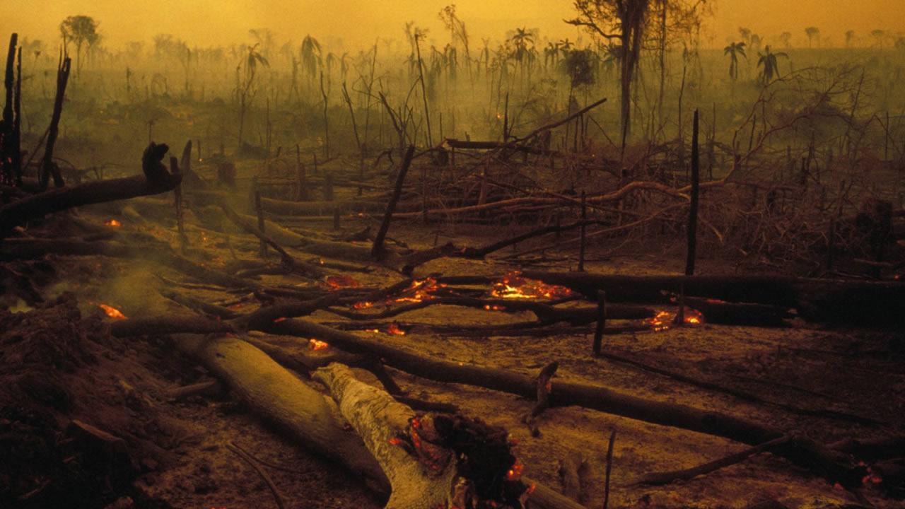 «Nos enfrentamos a una potencial sexta extinción masiva», advierte científico David Attenborough