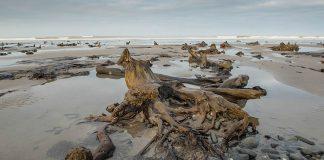 Tormenta Francis revela un antiguo bosque petrificado de 4.500 años en Gales