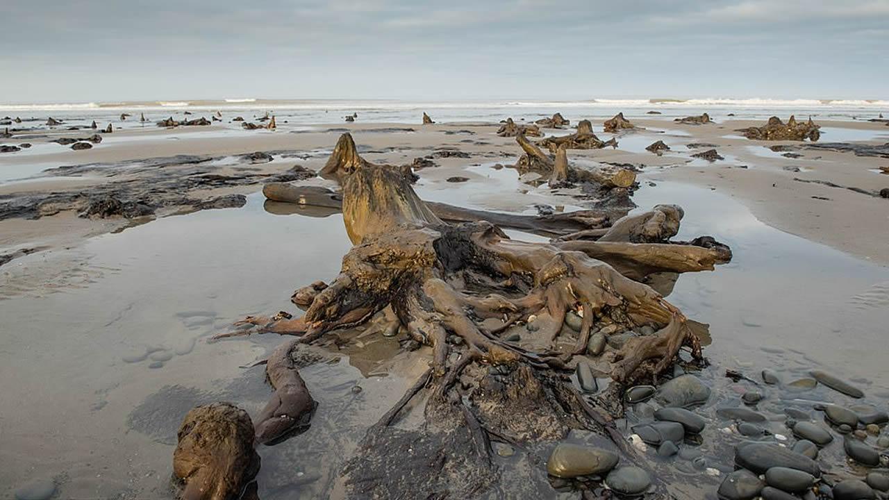 Antiguo bosque petrificado de 4.500 años fue revelado por tormenta Francis en Gales