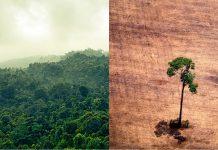 El 40% de la Amazonía a punto de perderse y se convertiría en un ecosistema tipo sabana