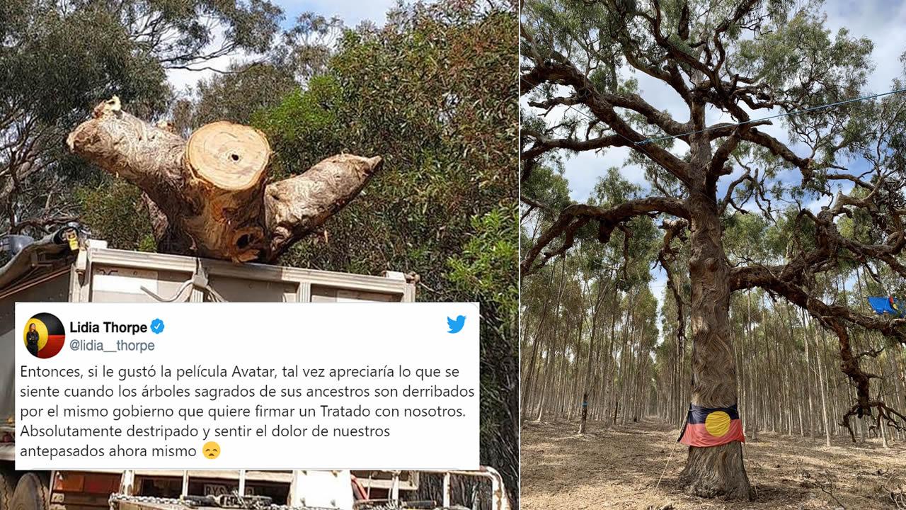 Árbol sagrado de Djab Wurrung de aborígenes australianos fue derribado para construir una carretera