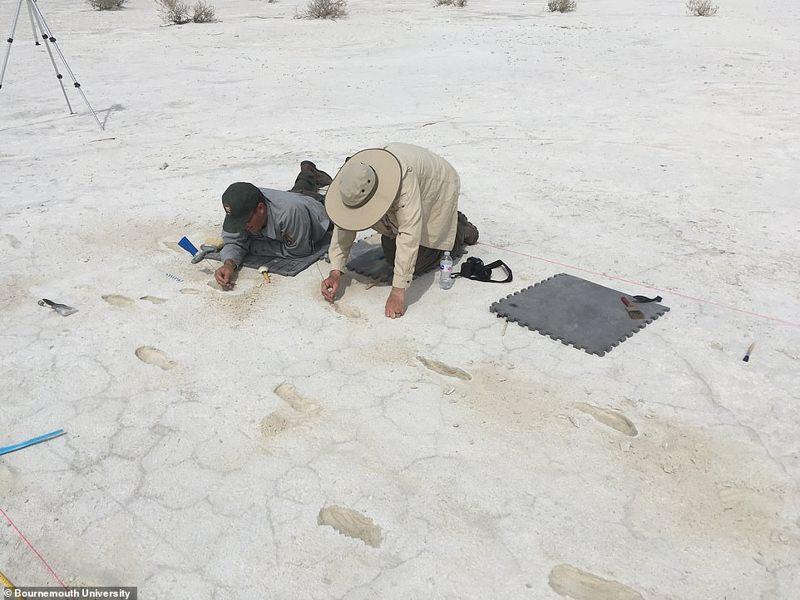Descubren el peligroso viaje de una madre y su hijo hace 13.000 años en Nuevo México, entre depredadores antiguos