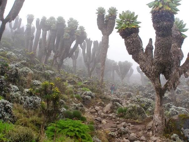 El bosque prehistórico que surgió hace un millón de años encontrado en el Kilimanjaro