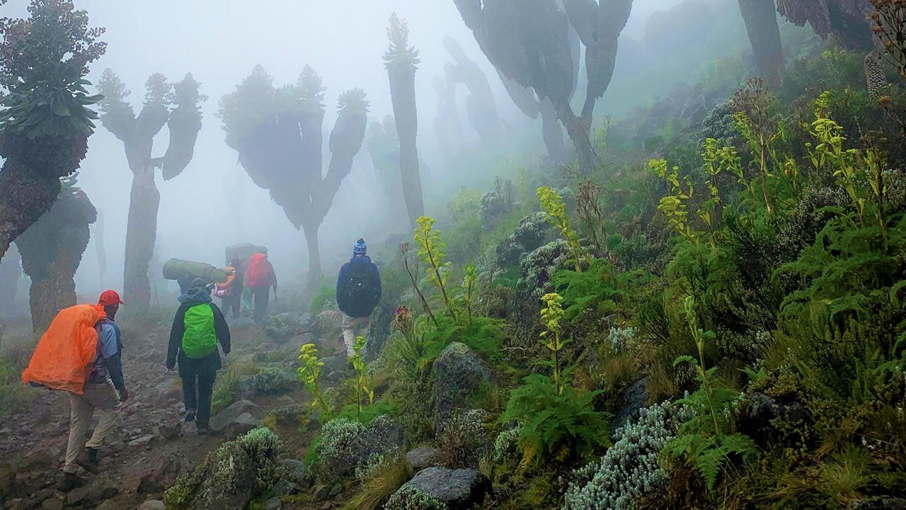 El bosque prehistórico que surgió hace un millón de años en el Kilimanjaro
