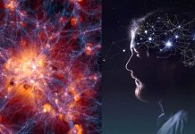 El cerebro humano tiene extrañas similitudes con el universo, dicen científicos