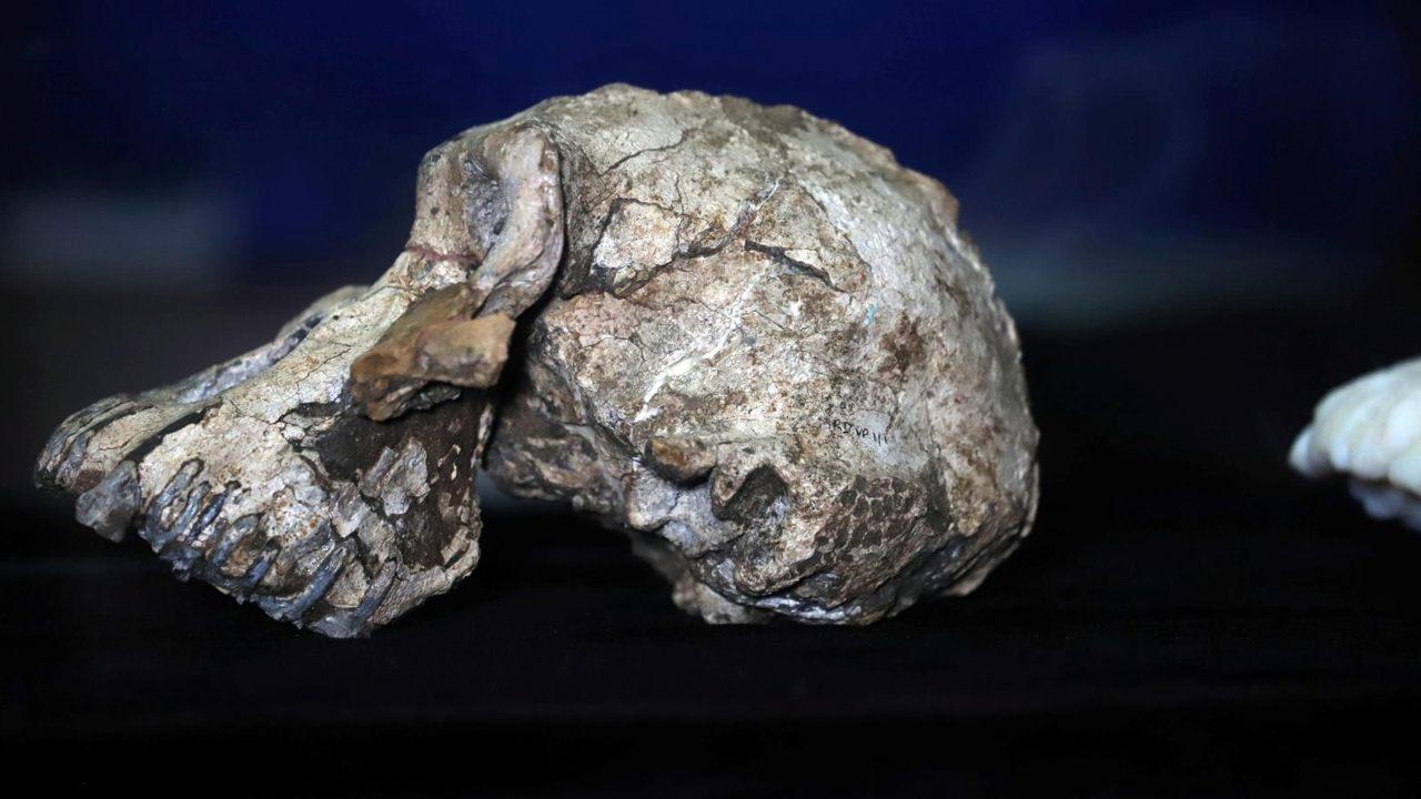 Cráneo de Florisbad de 260.000 años: desafiando la Teoría de la Evolución