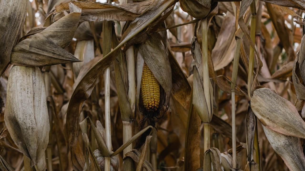 Funcionario de ONU advierte «hambrunas de proporciones bíblicas» para 2021