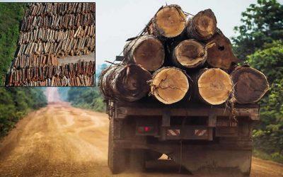 Humanidad debe detener su «guerra suicida» contra la naturaleza, dice Secretario General de la ONU