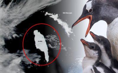 Iceberg más grande del mundo va en camino a chocar contra refugio de pingüinos y focas