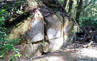 Muro de Kaimanawa: antigua estructura de piedra hallada en medio de la jungla