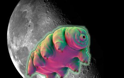 Los Tardígrados podrían haberse «apoderado» de la Luna
