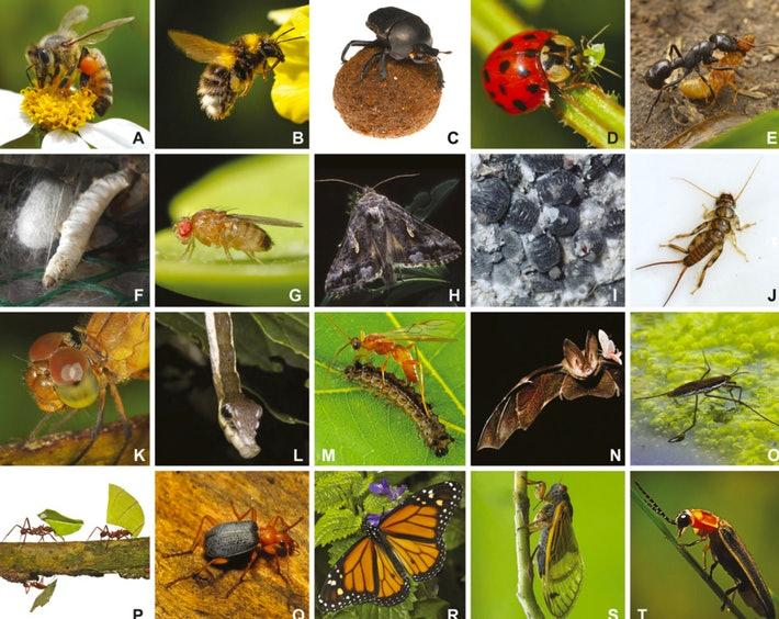 Naturaleza bajo asedio: el Apocalipsis de los insectos