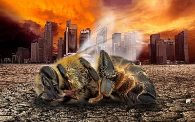 Naturaleza bajo asedio: el Apocalipsis de los insectos nos afectará a todos