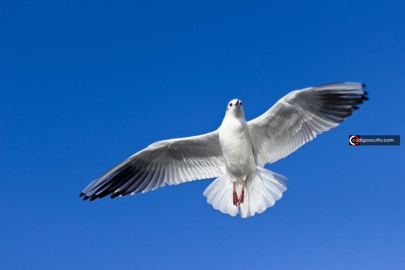 Aves poseen un misterioso «sentido cuántico» y ha sido visto en acción por primera vez