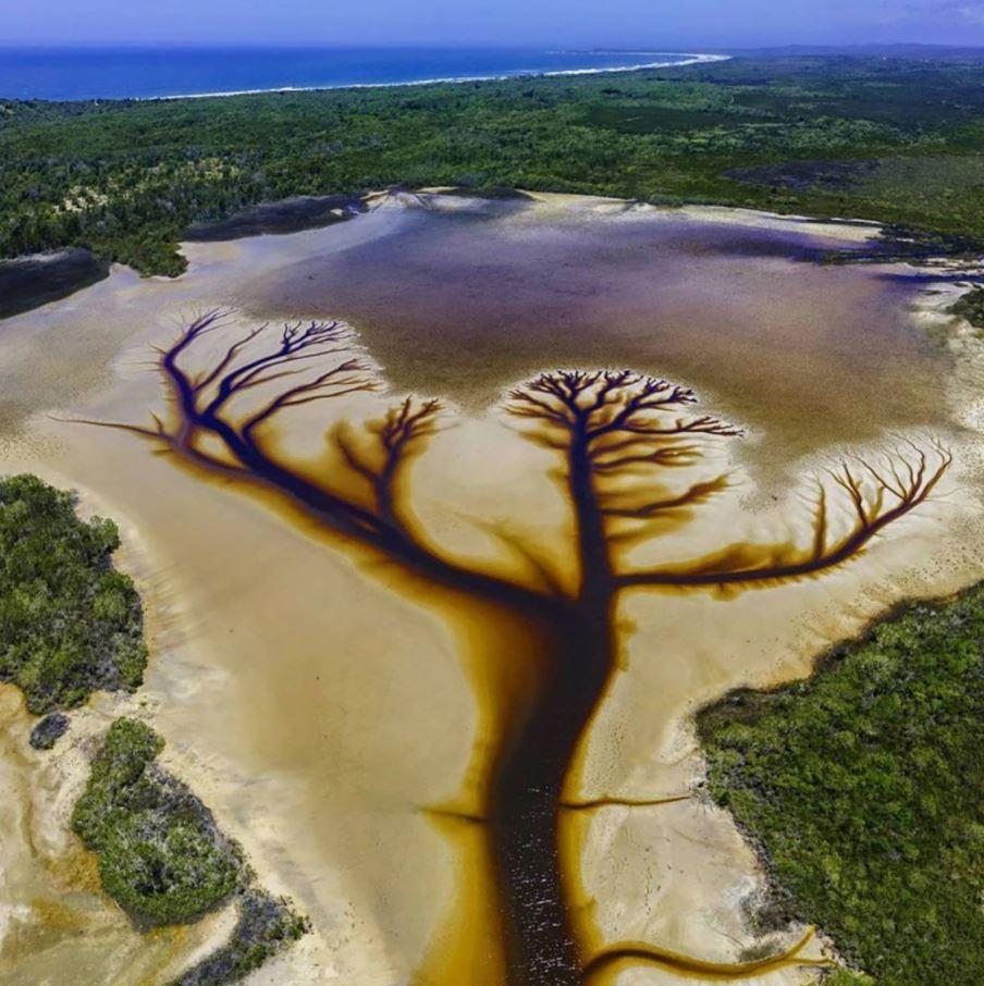 Árbol de la vida en un río de Australia