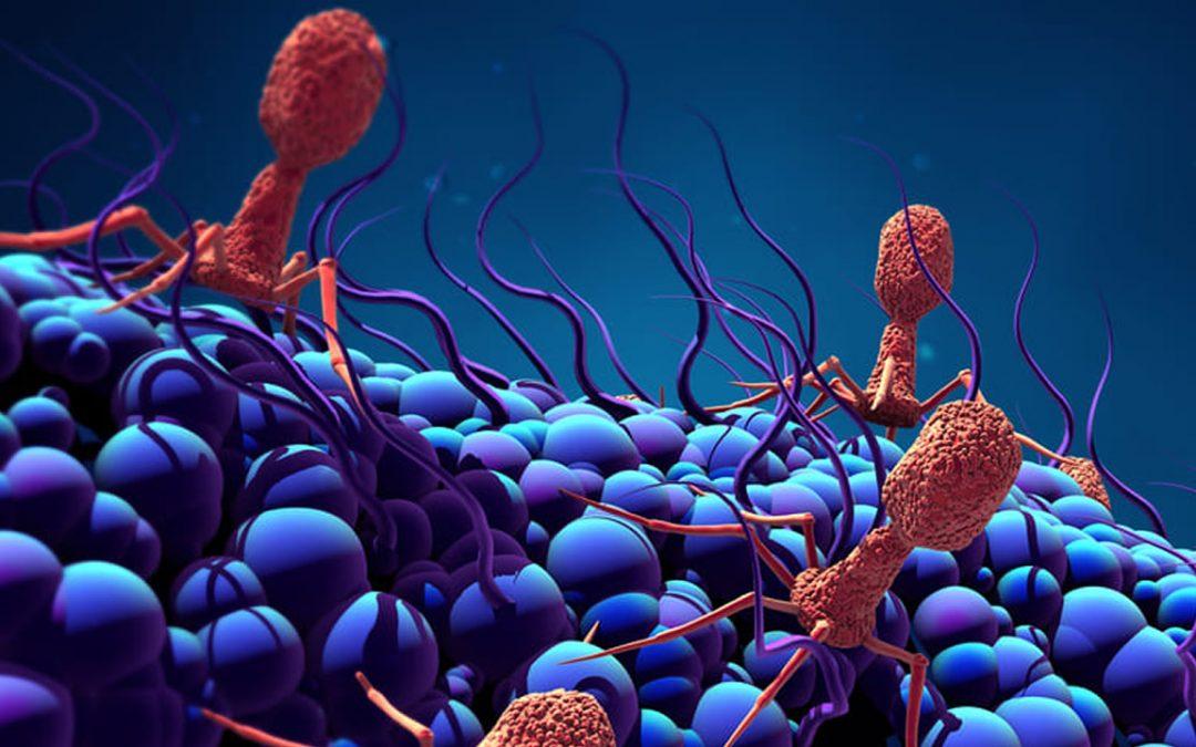 Descubren 70.000 virus nunca antes vistos en el intestino humano