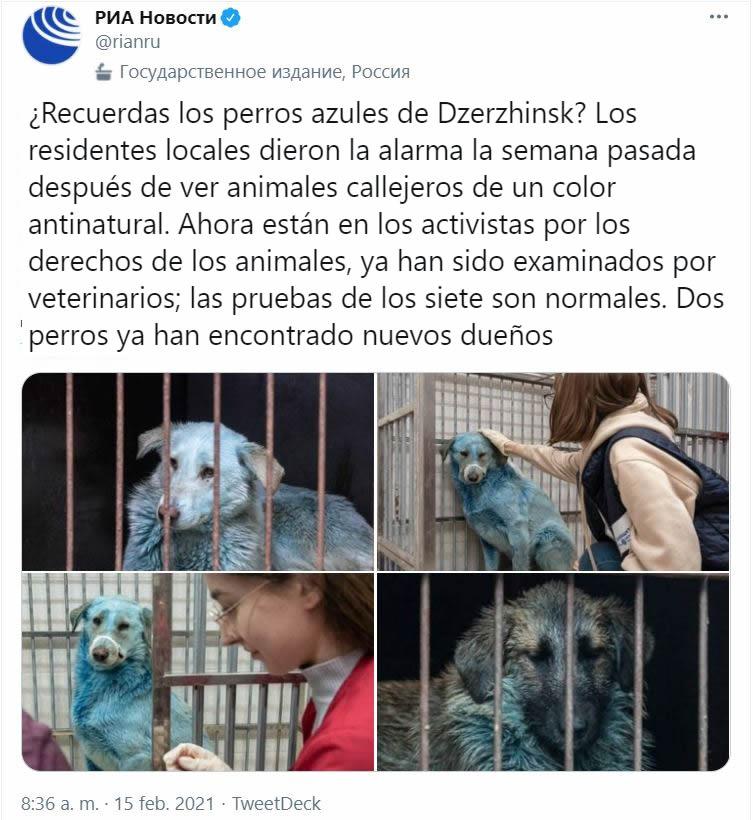Perros azules encontrados en Rusia cerca de fábrica abandonada
