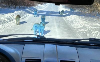 Perros azules descubiertos cerca de planta química abandonada en Rusia