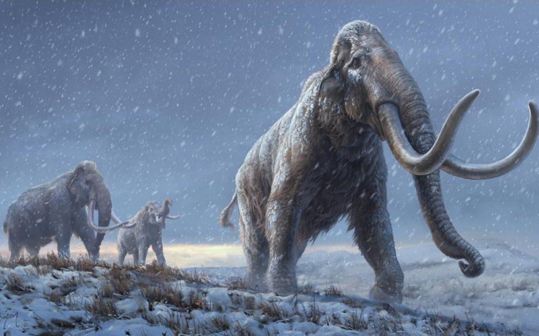 Logran secuenciar ADN de mamut de más de un millón de años, el más antiguo del mundo hasta ahora