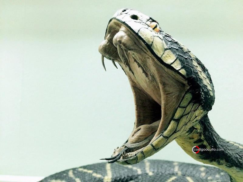 Humanos podrían desarrollar la capacidad de producir veneno como las serpientes