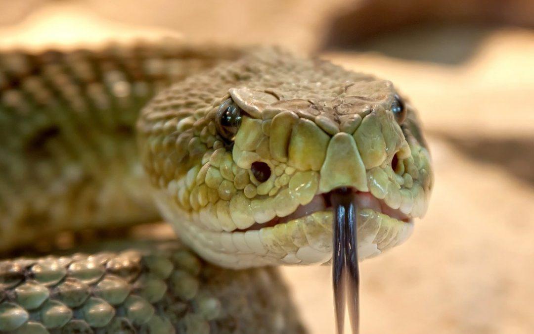 Humanos poseen la capacidad de desarrollar veneno como las serpientes