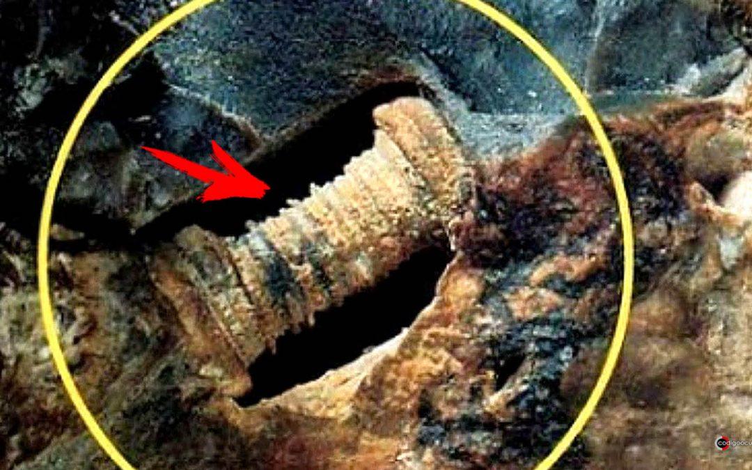 Extraño hallazgo: ¿Un tornillo «alienígena» de 300 millones de años o una criatura fosilizada?