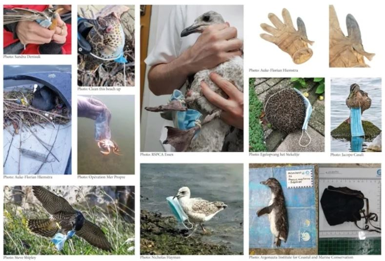 Animales interactuando con basura EPP