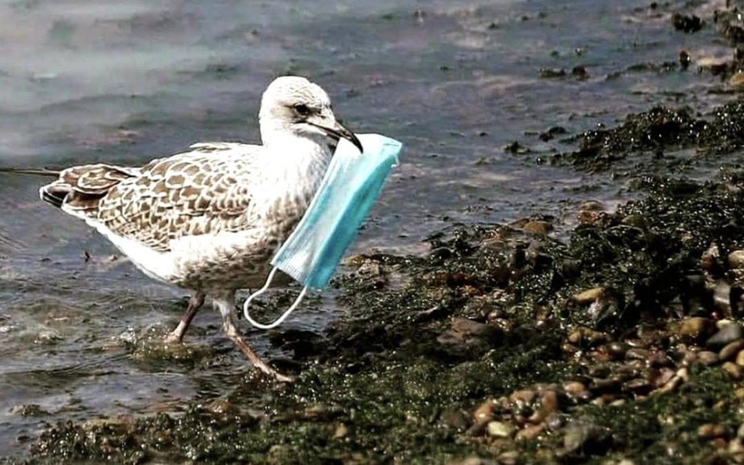 Nuestra basura pandémica está acabando con la vida silvestre a una escala devastadora