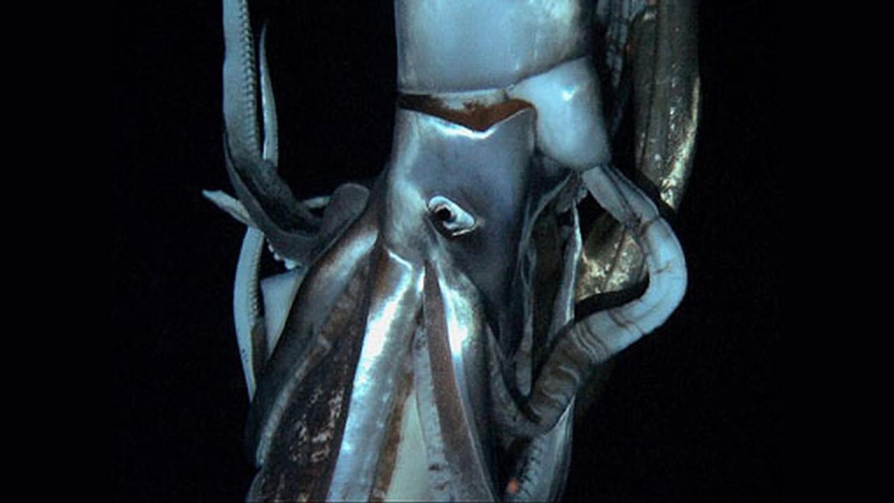 Cómo los científicos capturaron imágenes del «Kraken» luego de siglos de búsqueda
