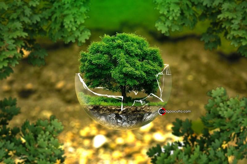 Aproximadamente el 97 por ciento de los ecosistemas terrestres han sido alterados