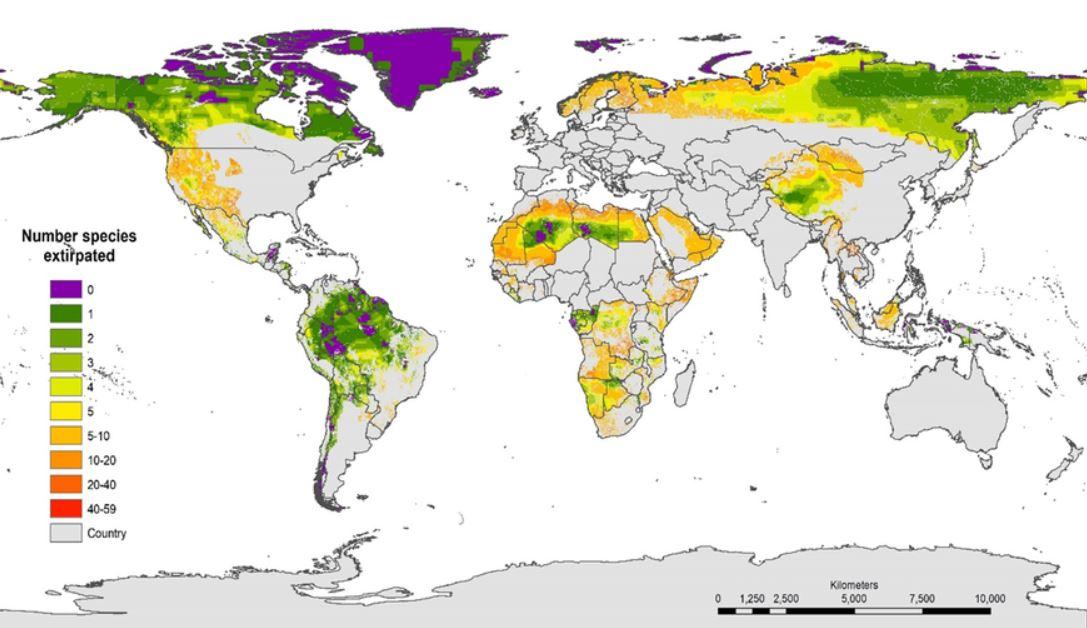 La reintroducción de entre 1 y 5 especies en muchas áreas silvestres podría aumentar su estado ecológicamente intacto