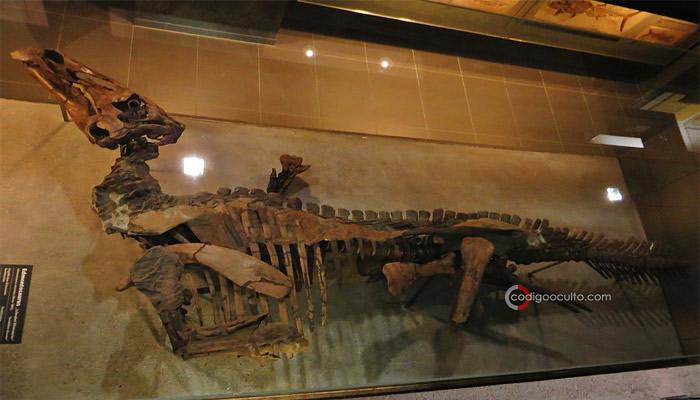 El fósil de Edmontosaurio encontrado en los desiertos de Wyoming se asemeja más a una momia