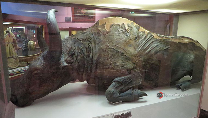Blue Babe es un bisonte estepario de 36.000 años