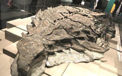 ¿Cuáles son los fósiles mejor preservados descubiertos?