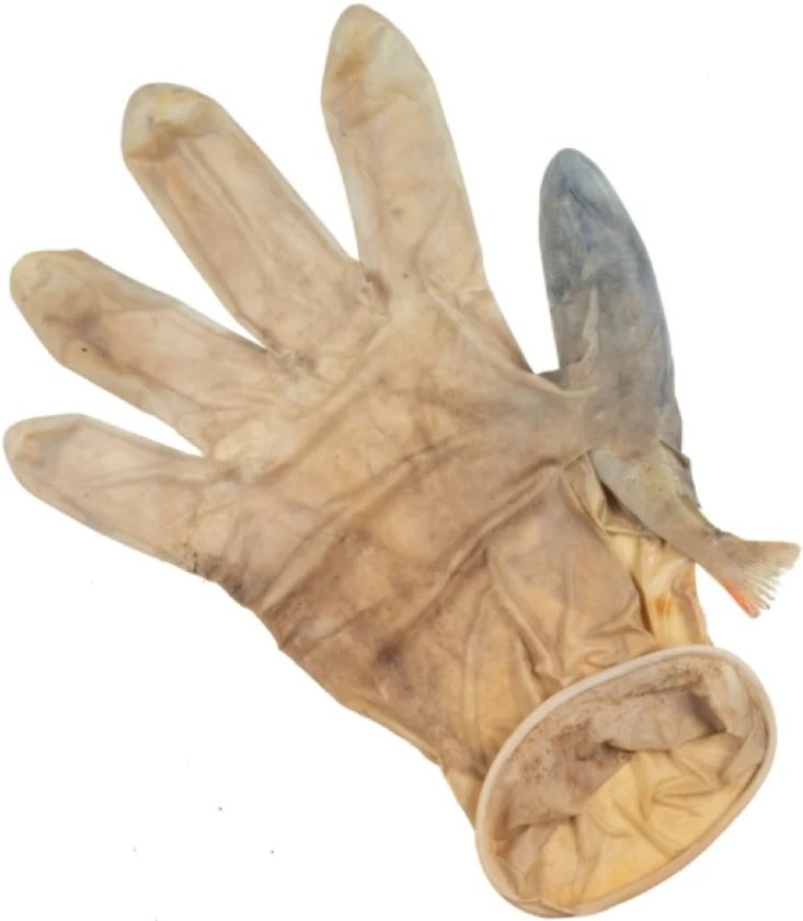 Un pez atrapado en un guante