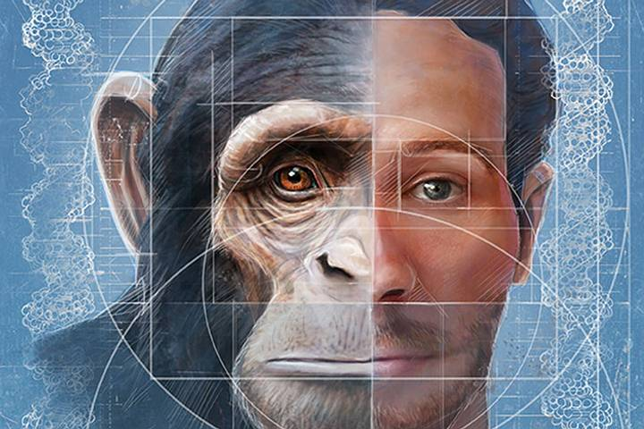 La creación de quimeras mono humano ha despertado la polémica por las cuestiones éticas.
