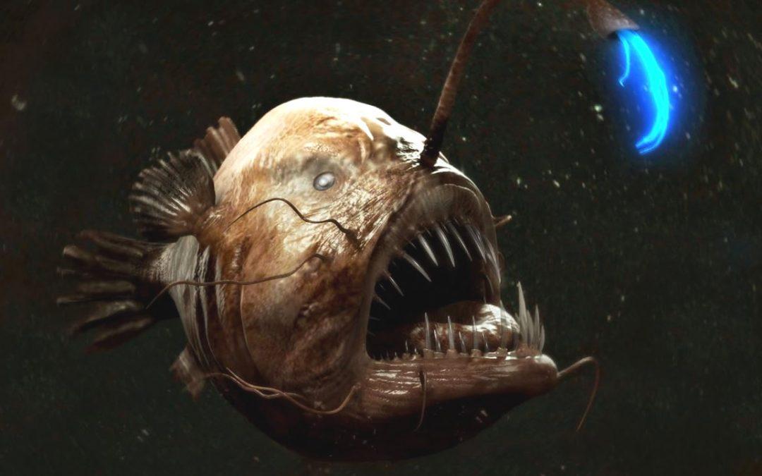 Rape, el pez de las profundidades que es más extraño que la ciencia ficción
