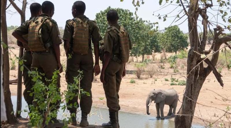 Mujeres Akashinga protectoras de la vida animal en África