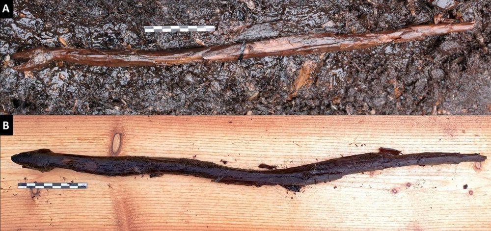 Fotografía de la serpiente milenaria encontrada