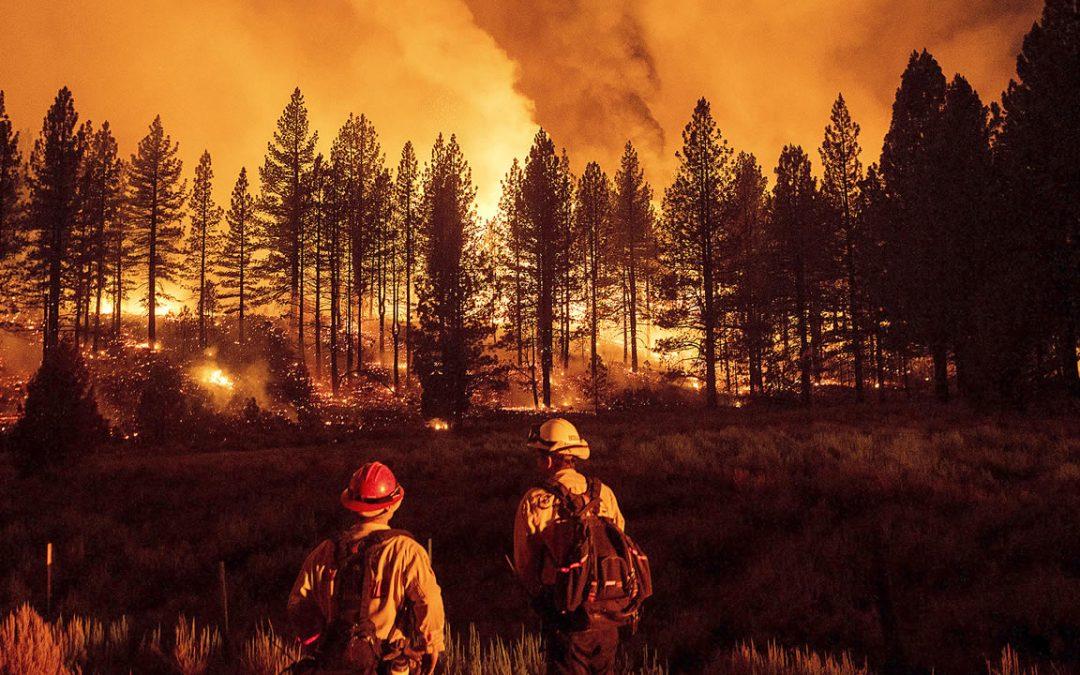 Siberia, Finlandia, Italia, Turquía, California en llamas: incendios forestales consumen millones de hectáreas