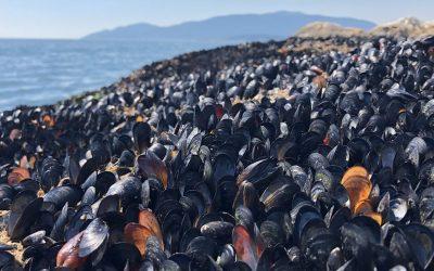 Recientes olas de calor han matado a más de mil millones de criaturas marinas