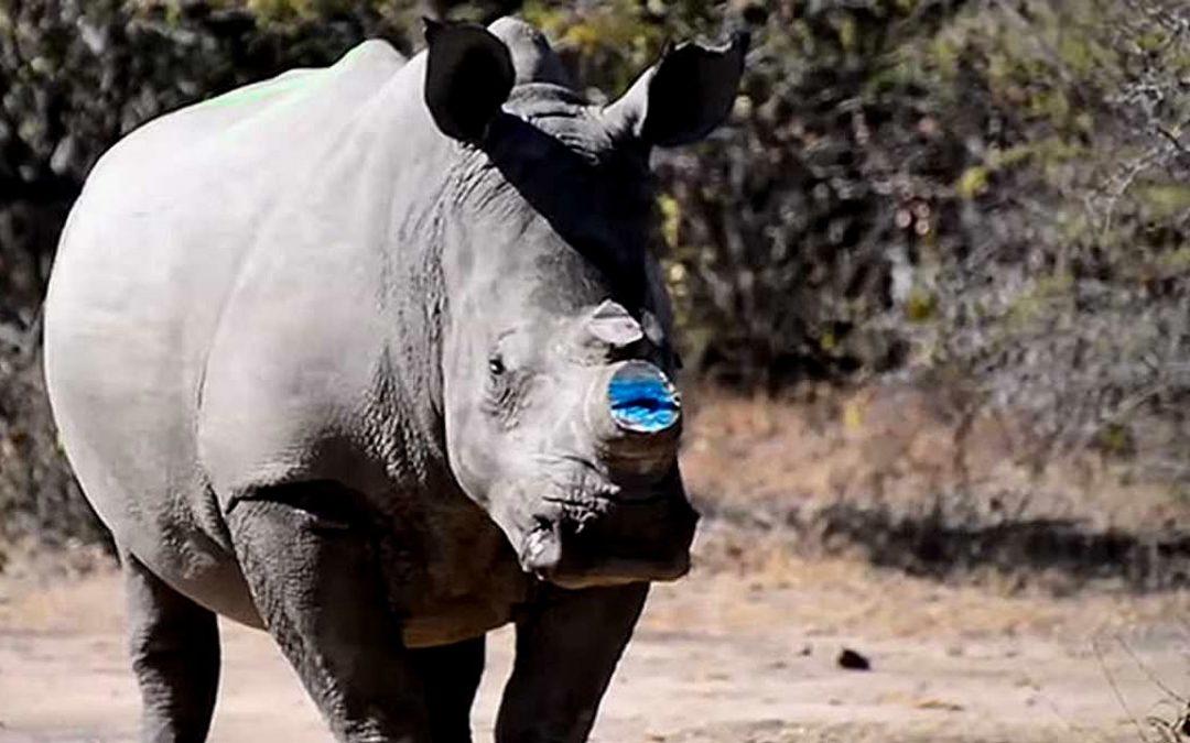 """Tasas de extinción de especies animales son récord y se están """"acelerando"""""""