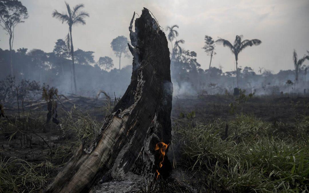 Selva amazónica ha empezado a emitir más dióxido de carbono del que puede absorber