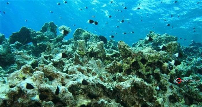 Acidificación del océano afecta a la vida marina, especialmente a los arrecifes de coral