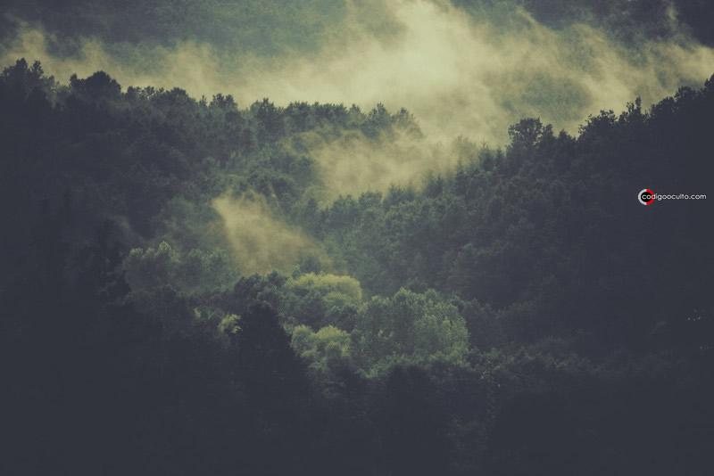 Imagen de bosques