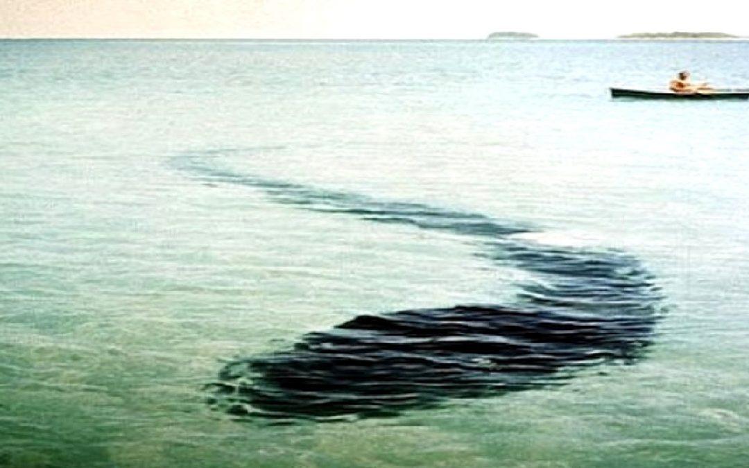 """Misteriosa y enorme """"criatura marina"""" se acerca a pescador y obliga a cerrar playa de Inglaterra"""